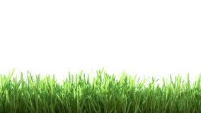 Grünes Gras des neuen Frühlinges Lizenzfreie Stockfotos