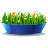 Grünes Gras des neuen Frühlinges in einem Topf Lizenzfreie Stockbilder