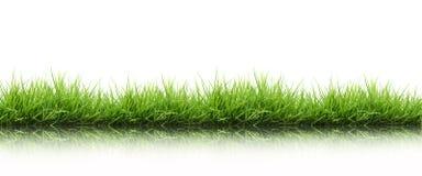 Grünes Gras des neuen Frühlinges getrennt Lizenzfreie Stockbilder