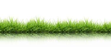 Grünes Gras des neuen Frühlinges getrennt Stockfoto