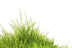 Grünes Gras des neuen Frühlinges getrennt Stockfotografie