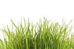 Grünes Gras des neuen Frühlinges getrennt Lizenzfreie Stockfotos