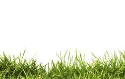Grünes Gras des neuen Frühlinges getrennt Stockbilder