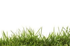 Grünes Gras des neuen Frühlinges getrennt Stockfotos