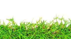 Grünes Gras des neuen Frühlinges. Lizenzfreie Stockbilder