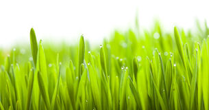 Grünes Gras des neuen Frühlinges Stockfoto