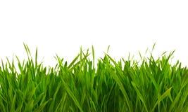 Grünes Gras des neuen Frühlinges lokalisiert auf Weiß Stockfotos