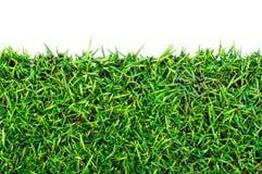 Grünes Gras des neuen Frühlinges mit Ausschnitts-Pfad Stockfotos