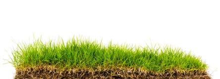 Grünes Gras des neuen Frühlinges mit Boden Stockfotos