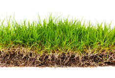 Grünes Gras des neuen Frühlinges mit Boden Stockbild