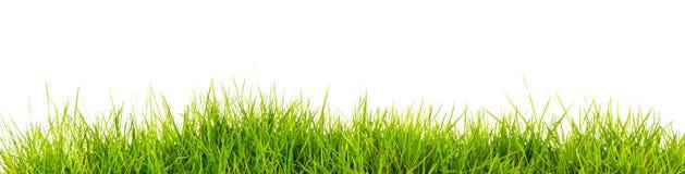Grünes Gras des neuen Frühlinges mit Boden Lizenzfreies Stockbild