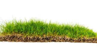 Grünes Gras des neuen Frühlinges mit dem Boden lokalisiert Stockfoto