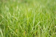 Grünes Gras des perfekten neuen Frühlinges lizenzfreie stockfotografie