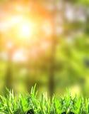 Grünes Gras des Sommers Lizenzfreie Stockfotografie
