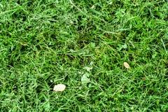 Grünes Gras des Sommers Stockbild