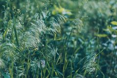 Grünes Gras des Sommers auf einem weichen Hintergrund stockbild