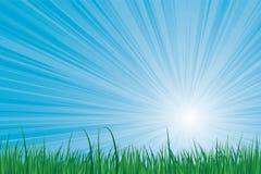 Grünes Gras des Sonnendurchbruchs Lizenzfreie Stockfotografie