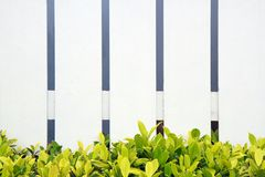 Grünes Gras des weißen Zauns Stockbilder