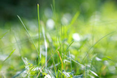 Grünes Gras an einem sonnigen Tag Stockfoto