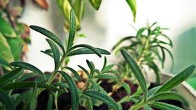 Grünes Gras in einem Topf lizenzfreies stockfoto