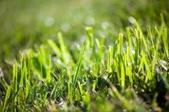 Grünes Gras in einer Sonne lizenzfreie stockfotos