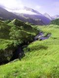 Grünes Gras eines Berges Stockfotos