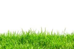 Grünes Gras für den Hintergrund lokalisiert Lizenzfreie Stockfotos