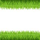 Grünes Gras-Feld lizenzfreie abbildung