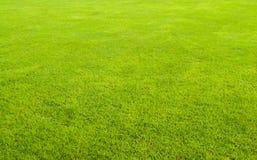 Grünes Gras-Feld Stockfoto