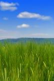 Grünes Gras-Feld und blauer Himmel Lizenzfreie Stockfotos