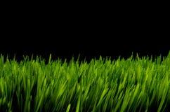 Grünes Gras gegen schwarzen nächtlichen Himmel Stockfotos