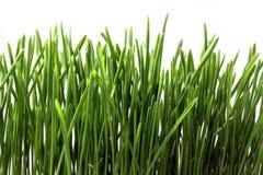 Grünes Gras getrennt Stockbild