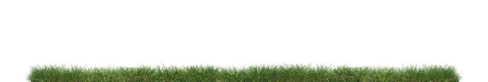 Grünes Gras getrennt stockbilder