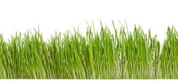 Grünes Gras getrennt auf Weiß Stockfotos