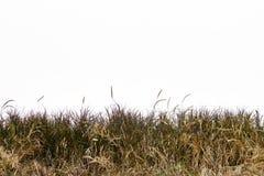Grünes Gras getrennt auf weißem Hintergrund Stockfotos