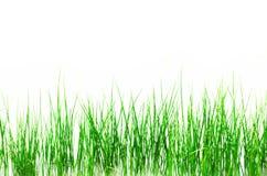 Grünes Gras getrennt auf weißem Hintergrund Lizenzfreie Stockbilder