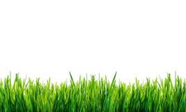 Grünes Gras getrennt auf weißem Hintergrund Stockfoto