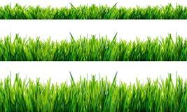 Grünes Gras getrennt auf weißem Hintergrund Stockbilder
