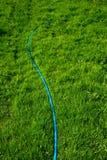 Grünes Gras gut gewässert lizenzfreie stockbilder