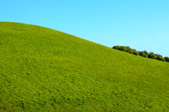 Grünes Gras-Hügel Stockfoto