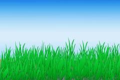 Grünes Gras-Hintergrund stockbilder