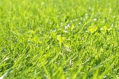 Grünes Gras-Hintergrund Stockfotos
