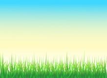 Grünes Gras-Hintergrund Lizenzfreies Stockfoto