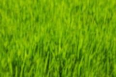 Grünes Gras-Hintergrund Lizenzfreie Stockbilder