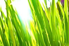 Grünes Gras-Hintergrund Stockfoto