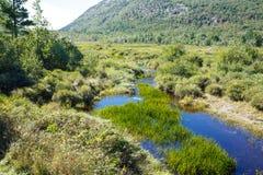 Grünes Gras im blauen Fluss von Maine Stockfotos