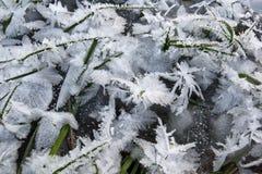 Grünes Gras im Eis Stockbild