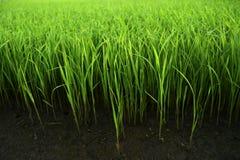 Grünes Gras im fruchtbaren Boden stockfoto