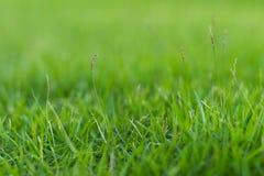 Grünes Gras im Garten Stockfotos