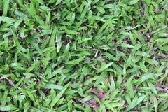 Grünes Gras im Garten Lizenzfreie Stockbilder
